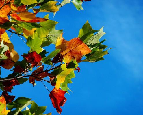 """""""Gyöngyvirágtól Lombhullásig"""""""